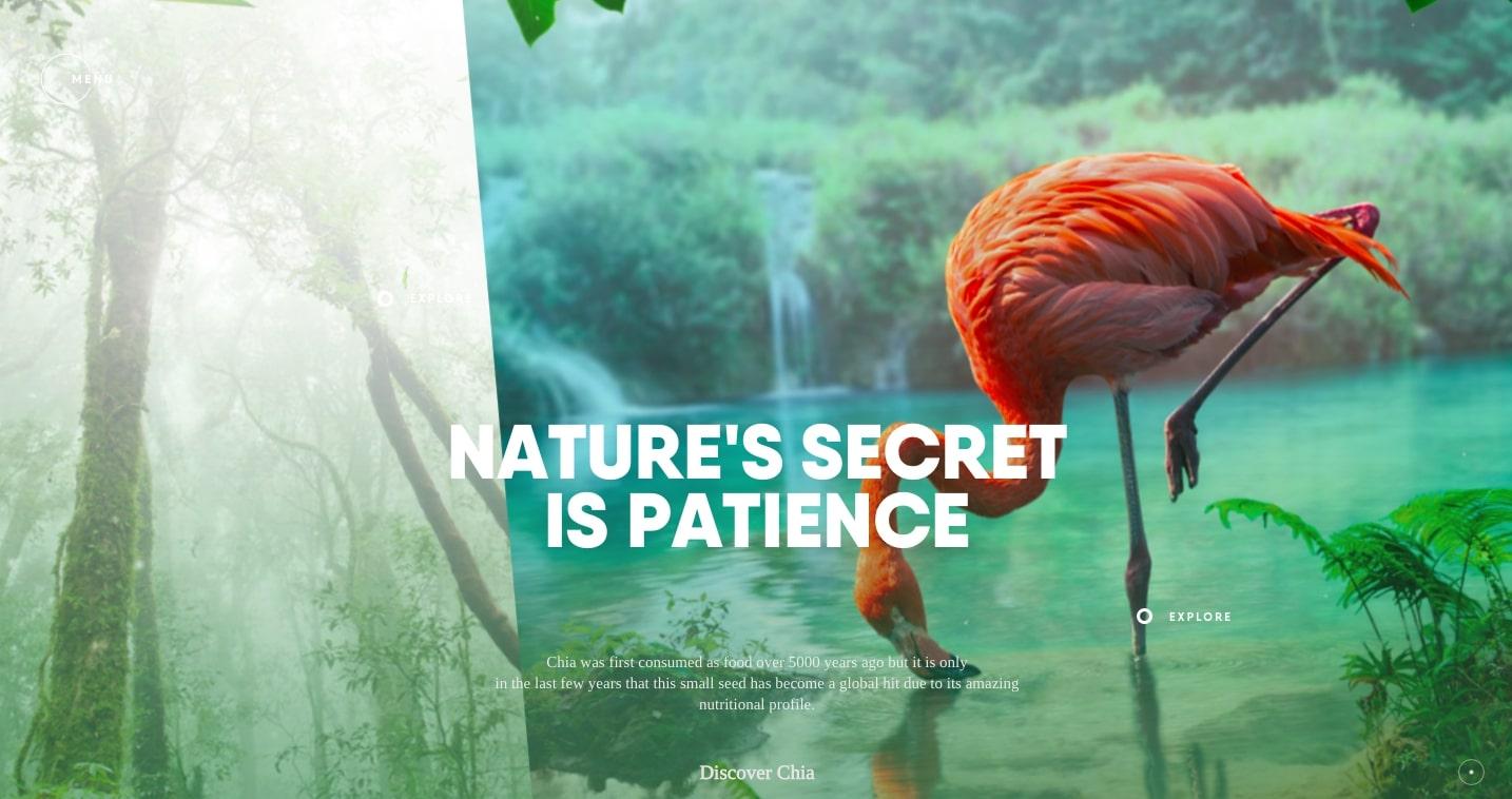 Rainforest Food - futuristic website