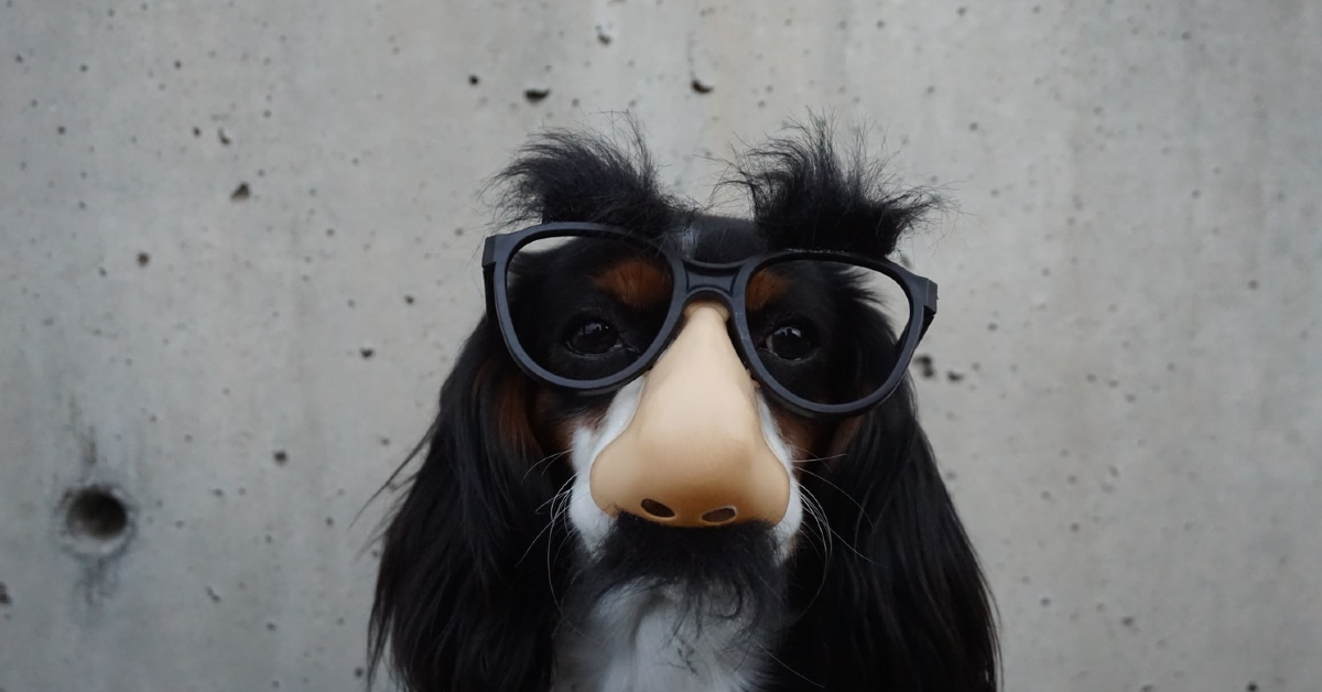 Dog wearing a disguise - The Best of April Fools Day Marketing Campaigns